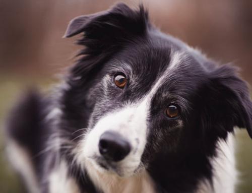 Assurance santé pour chien et chat : quelles garanties ?