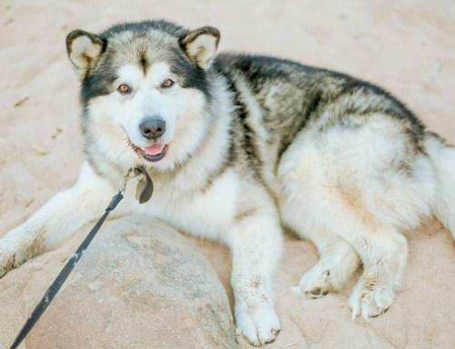 C'est l'été: 5 conseils pour prendre soin de votre chien