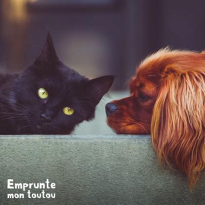 conseils santé pour chien et chat