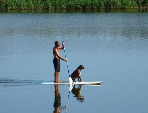 Faire une activité avec son chien : le Cani-paddle