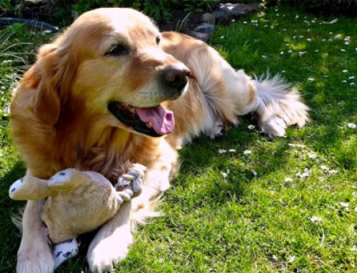 Le chien le plus affectueux du monde
