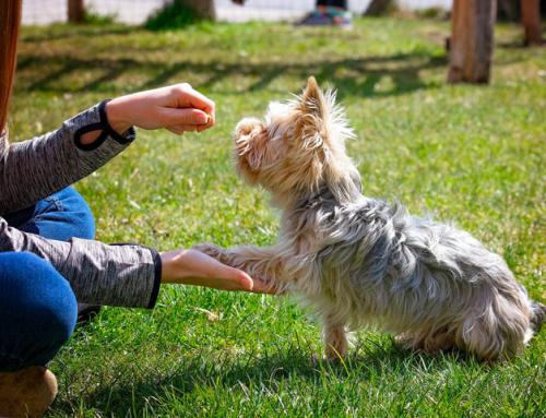 Guide du Maître : éduquer son chien (les bases)