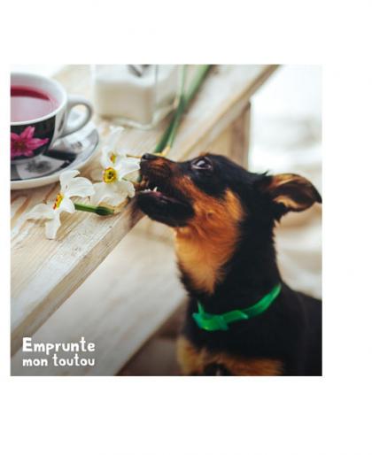 chien mangeant une fleur