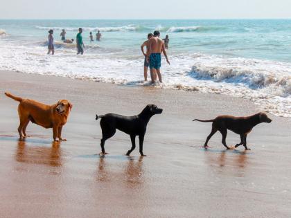 amener son chien à la plage