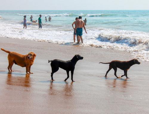 10 plages françaises autorisées aux chiens