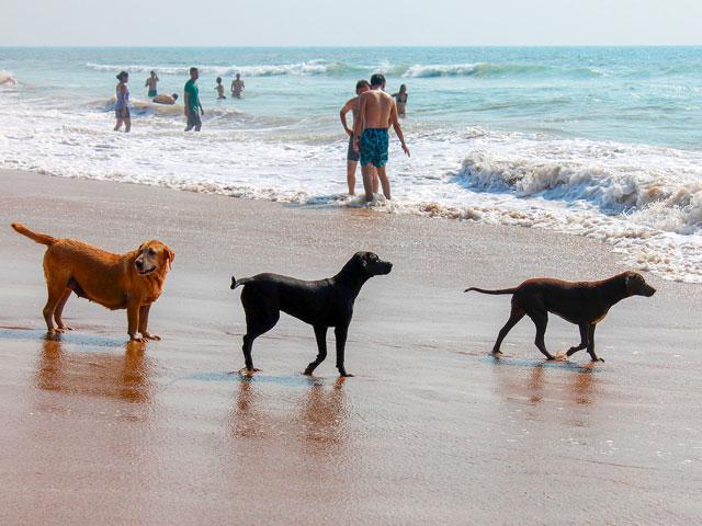 chiens à la plage