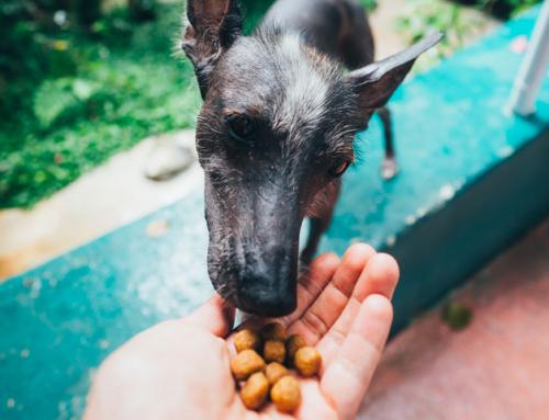 équilibre & instinct : une alimentation respectueuse et de qualité pour votre chien !