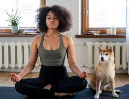 Faire une activité avec son chien : le Doga