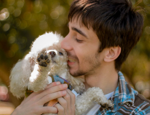 8 métiers pour les passionnés de chien