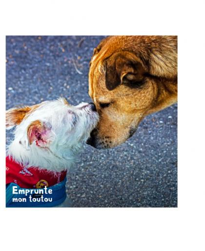 2 chiens se touchant le museau