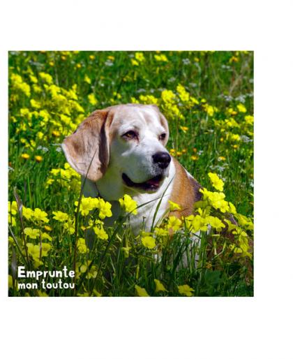 Chien dans un champ de fleurs jaunes