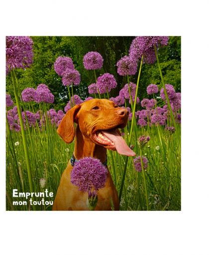 chien assis dans de hautes fleurs violettes