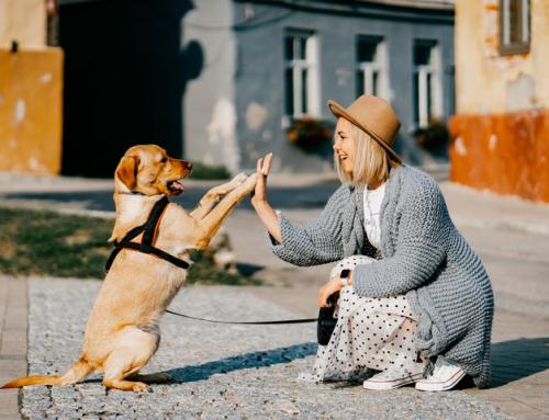 Animal Privé : tout ce qu'il faut pour les toutous à prix doux