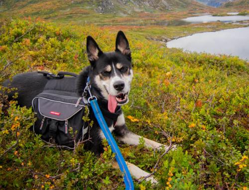 Faire une activité avec son chien : la cani-trottinette