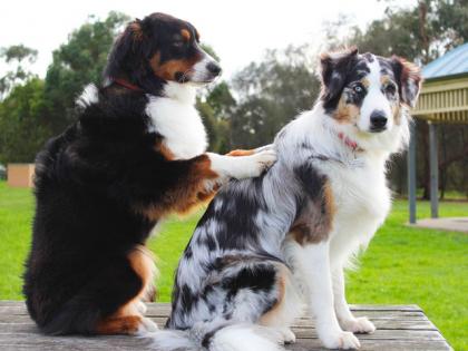 L'ostéopathie pour chien