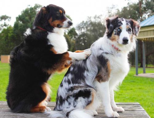A la rencontre de Mathilde Mazières, ostéopathe canin