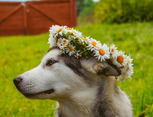 La Phytothérapie : soigner son chien grâce aux plantes