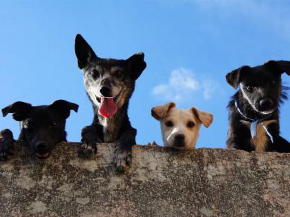 les plus beaux chiens croisés d'instagram