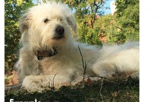 chien allongé dans l'herbe