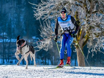 le ski-joering canin
