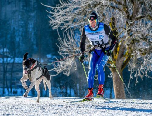 Faire une activité avec son chien : le ski joering canin