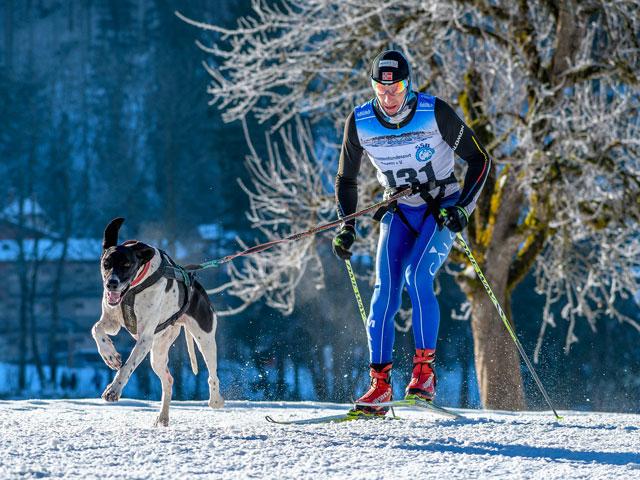 Homme pratiquant le ski-joering avec son chien