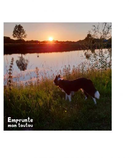 chien devant un étang au coucher du soleil