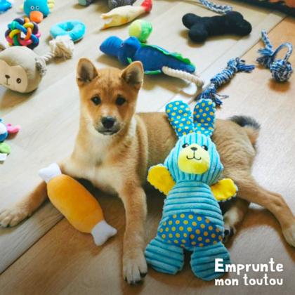 chiot Shiba inu entouré de jouets