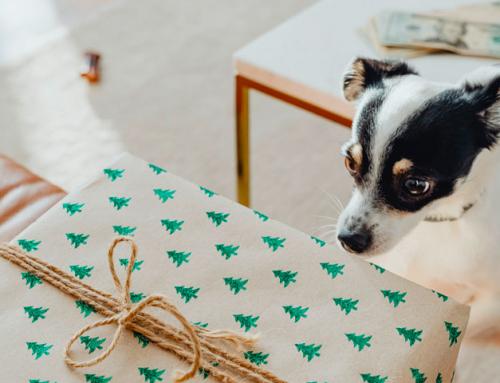 DIY (Do it Yourself) : 3 idées cadeaux à offrir à votre chien !