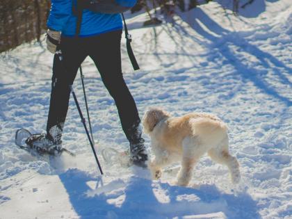 une personne et son chien pratiquant la cani-raquettes