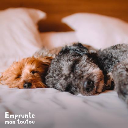 2 chiens dormant sur un lit