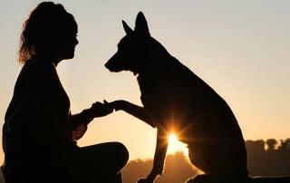 silhouette d'une femme tenant son chien par la patte