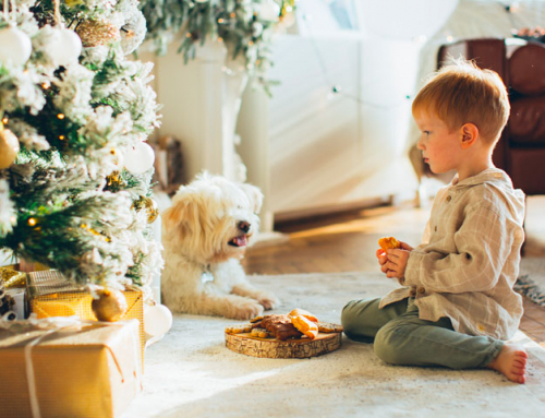 5 conseils pour passer de bonnes fêtes avec votre chien