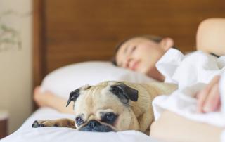 jeune femme dormant avec son chien