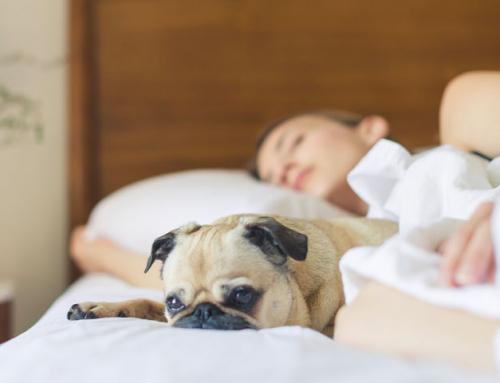 Dormir avec son chien : une bonne idée ?