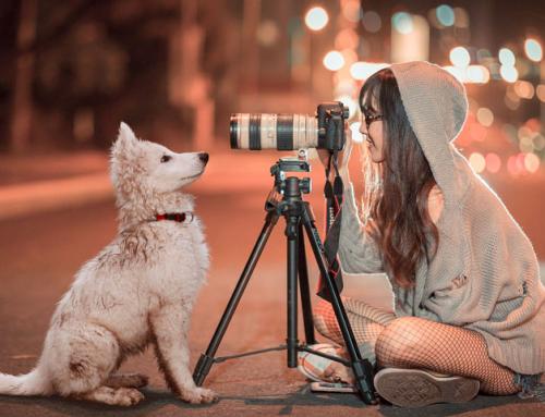 7 conseils pour faire de belles photos de votre chien
