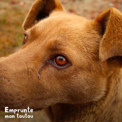 chien présentant un écoulement oculaire