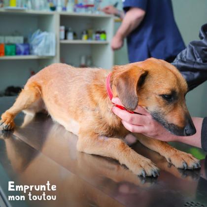 chien sur la table du vétérinaire