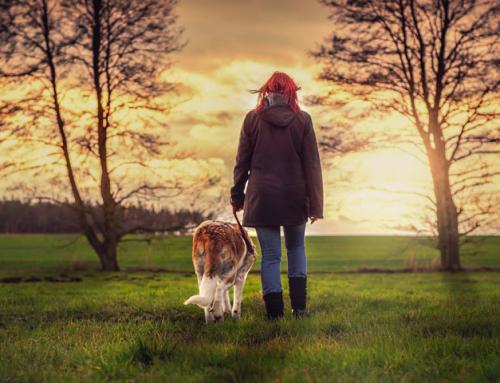 L'amour d'un chien, la meilleure des thérapies