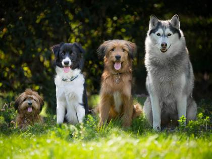 7 chiffres étonnants sur les chiens