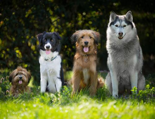 7 chiffres étonnants sur les chiens !