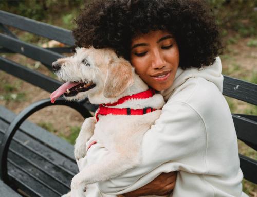 Guide de l'Emprunteur : construire une relation de confiance avec un chien