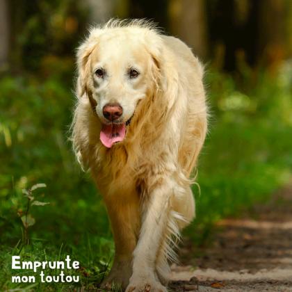 chien atteint par la maladie de Cushing
