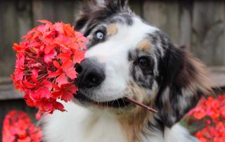 naturopathie pour chien