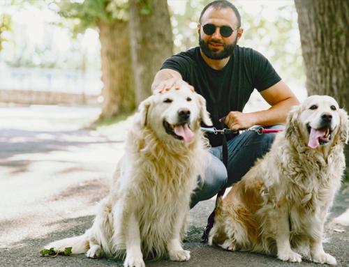 Top 10 des chiens faciles à éduquer