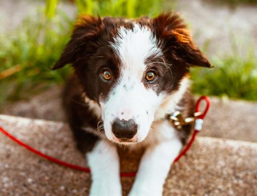 Guide du Maître : pourquoi vermifuger son chien ?