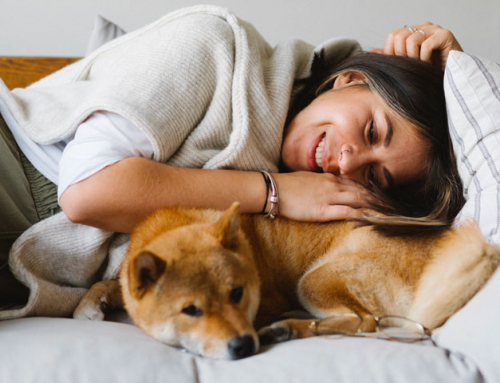 La communication animale : tout savoir