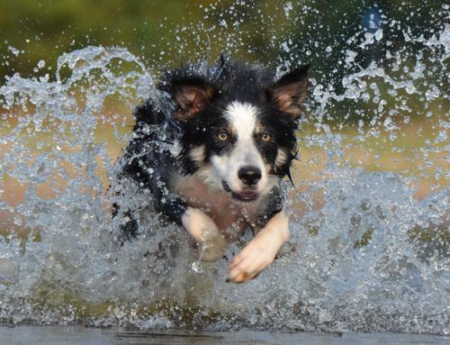 Faire une activité avec son chien : la nage