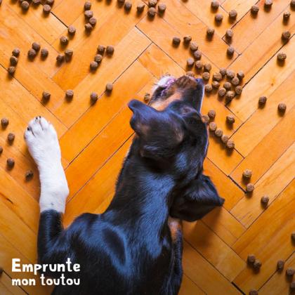 chien mangeant des croquettes bio sur le sol