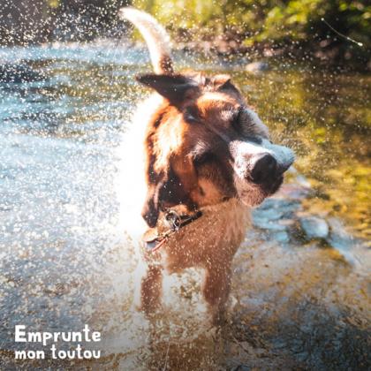 chien s'ebrouant lors d'une randonnée aquatique